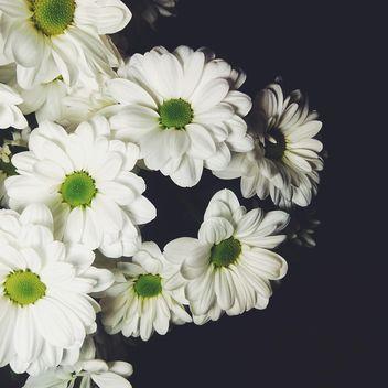 White chrysanthemum - Kostenloses image #301393