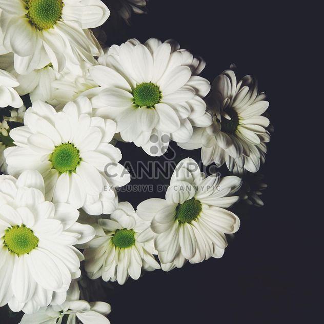 White chrysanthemum - Free image #301393