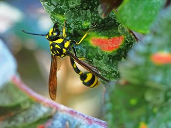 Black and yellow insect - image gratuit #301753