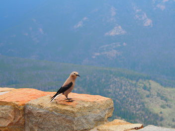 Bird on ledge - Free image #301863