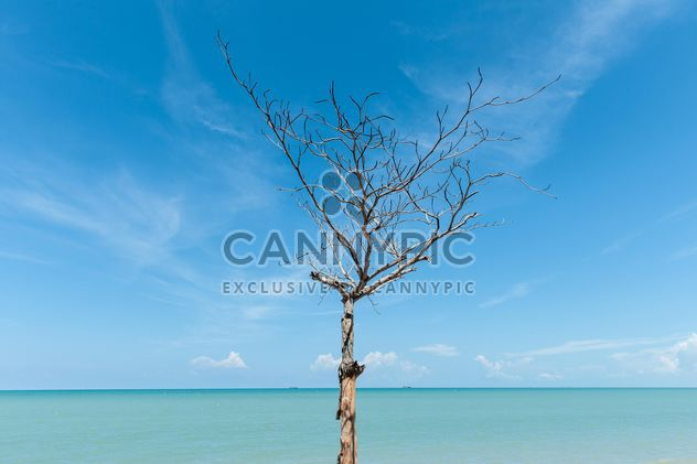 toter Baum am Strand - Free image #303343