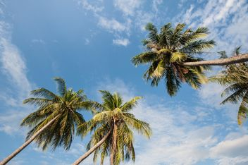 Palms against the sky - image #303753 gratis
