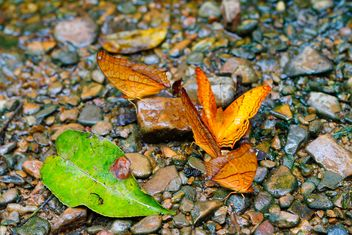 Butterflies feeding on ground - Free image #303783