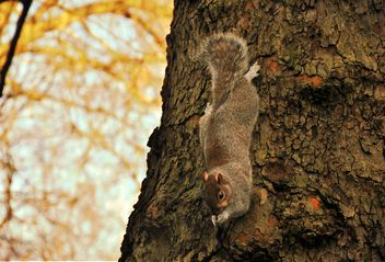 Squirrel on the tree - image #303953 gratis
