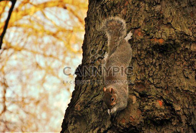 écureuil dans l'arbre - image gratuit #303953