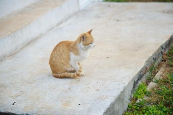 red cat takes a morning walk - image gratuit #304033