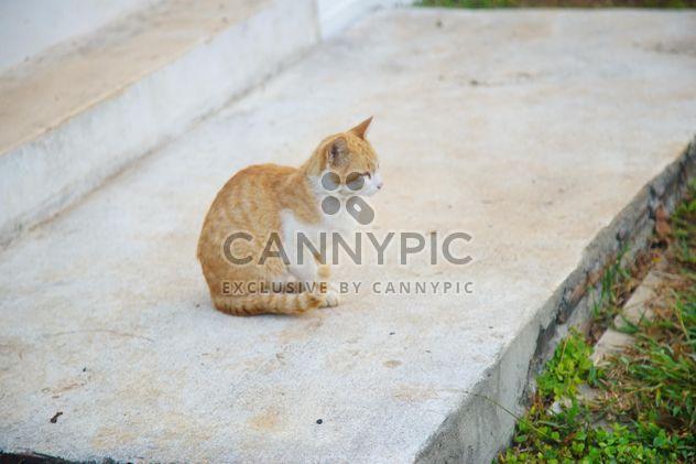 gato vermelho dá um passeio de manhã - Free image #304033