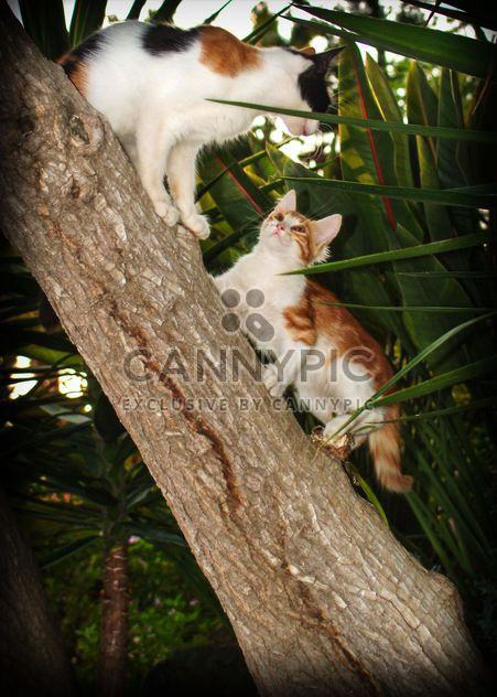 Two kitten on a tree - Free image #304053
