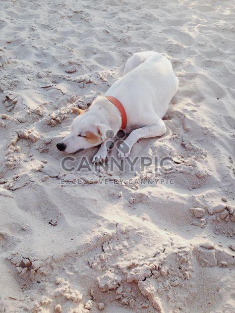 dog sleeping on the beach - Free image #304103