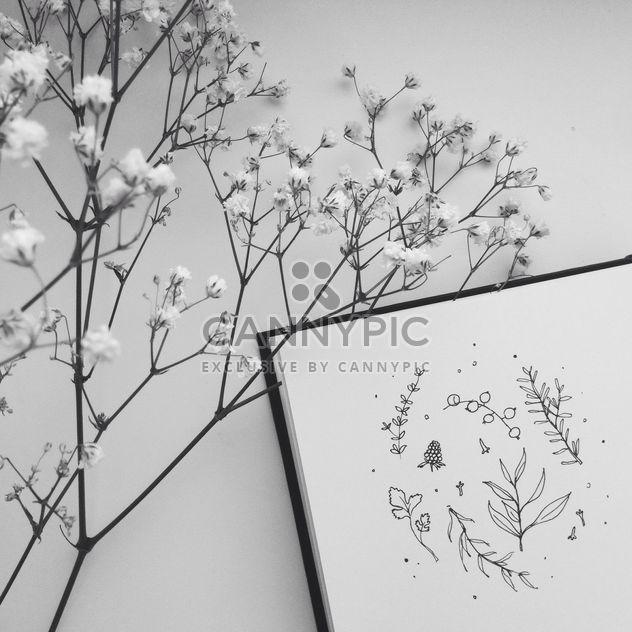 Травяные рисования и цветы ч/б - бесплатный image #304123