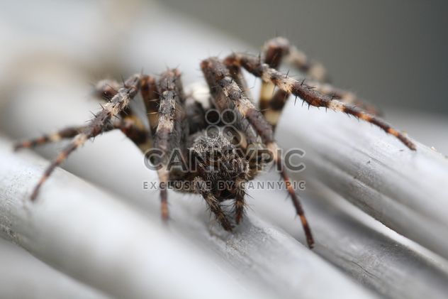 Крупный черный паук - бесплатный image #304363
