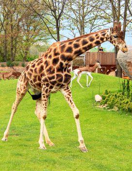 Giraffe in park - Free image #304543