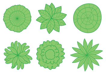 Plant Top View Vector - Free vector #304903