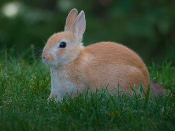 Bunny Rabbit - Free image #306223
