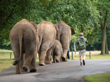 Elephant March - Free image #306283