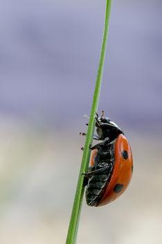 ladybug! - image gratuit #306593