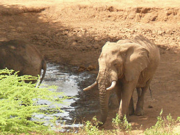 Elephants down to Drink ! - Free image #307473
