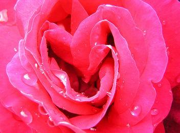 Happy hearts - Free image #307873