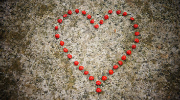 Romantic Heart from Love Seeds - Free image #309023