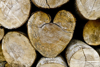 Heart Cut - image #309113 gratis