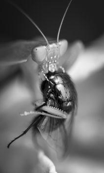 Feeding Mantis - Kostenloses image #317133