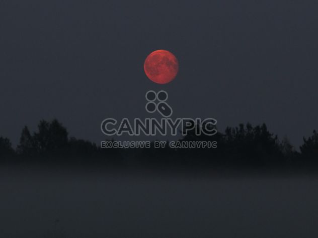 Moonrise in the fog - Free image #317373