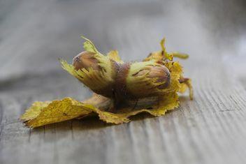 Hazel big nut plant - бесплатный image #317423