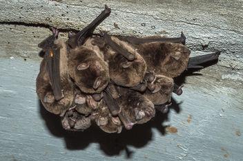 Bat Hammock - Free image #319073