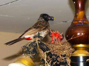 Birds - Free image #319393