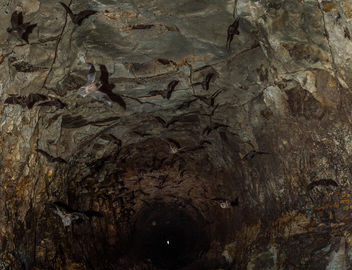 Bats Attack - Free image #319733