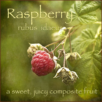 the raspberry - image #322243 gratis