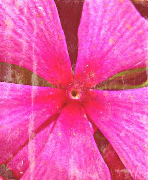 pink flower - image gratuit #322833