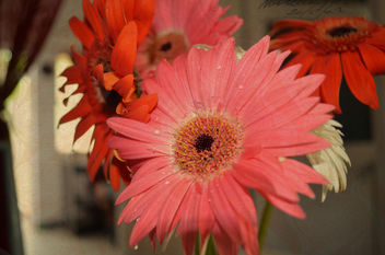 Adding Textures to the flowers, sitting pretty in my Vase - image gratuit #323543