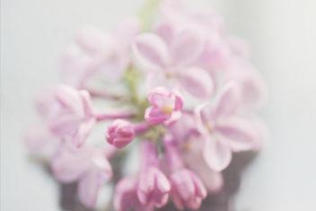 Purple Cluster - image #323673 gratis