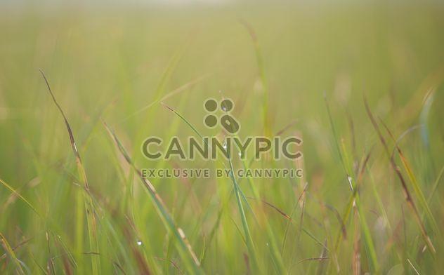 rosée sur l'herbe - Free image #328153