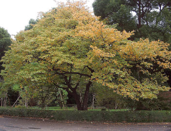 Japan (Tokyo) Autumn at Imperial Palace Garden - Kostenloses image #328403