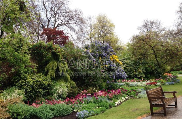 Blooming bushes in Hyde park, London - Free image #328413