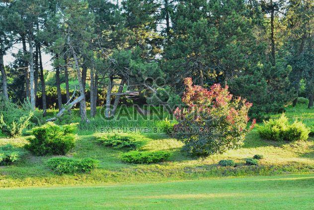 Verano en el Parque - image #328443 gratis