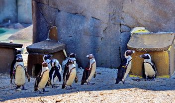 Group of penguins - image gratuit #328503