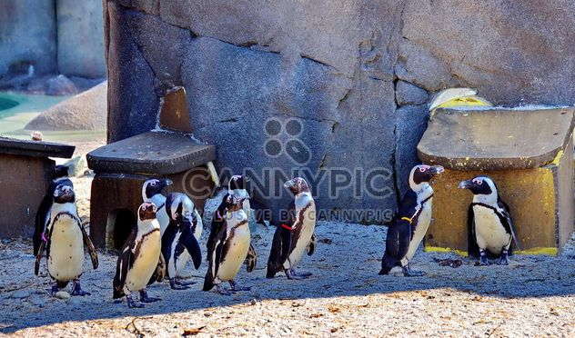 Group of penguins - Free image #328503