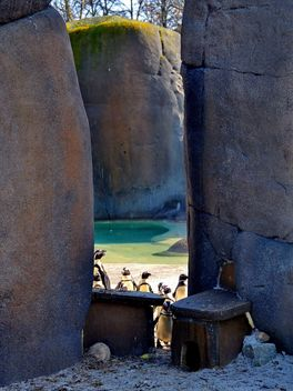 Group of penguins - Free image #328513