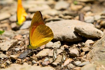 Butterfly on the rocks - image #328663 gratis