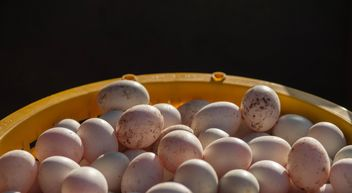 Duck eggs in yellow buckets - image gratuit #329663