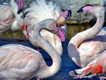 pink flamingos in park - бесплатный image #329883