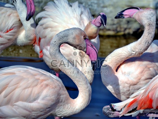 pink flamingos in park - Free image #329883