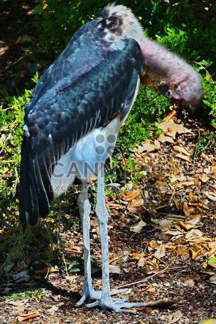 Marabu in park - image #329913 gratis