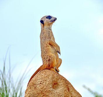 Meerkats in park - image #330233 gratis