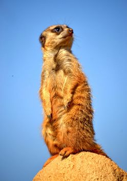 Meerkats in park - Free image #330243
