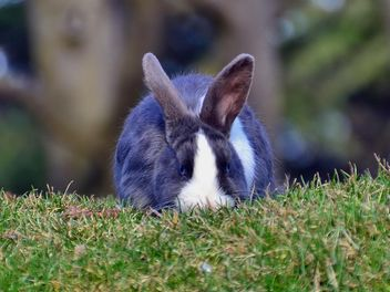 rabbits on a grass in a park - image gratuit #330283