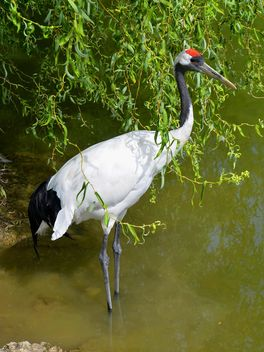 Crane in pond in a park - image gratuit #330293